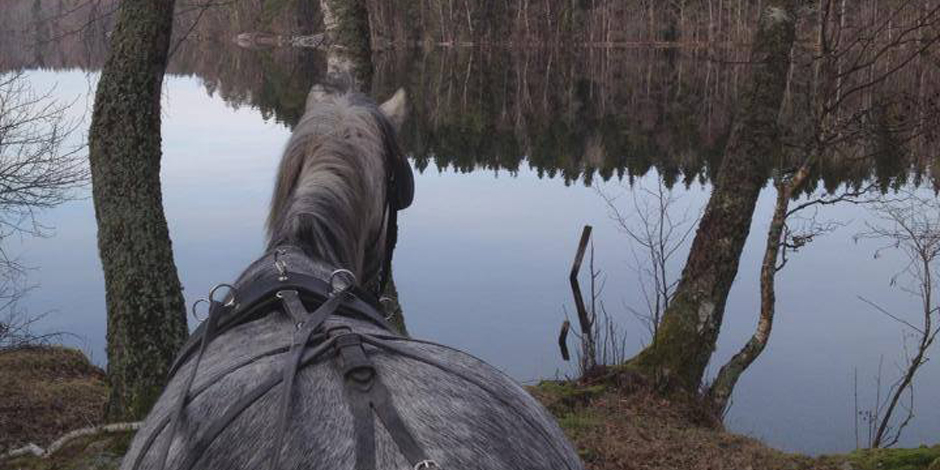 körning med häst